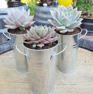 $15 THIS WEEKEND ONLY Sucullent flower and planter